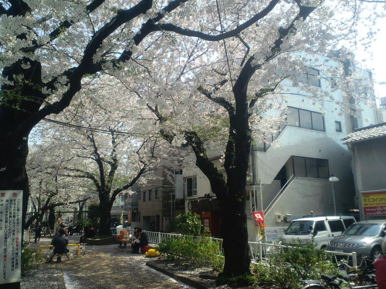 桜もそろそろ