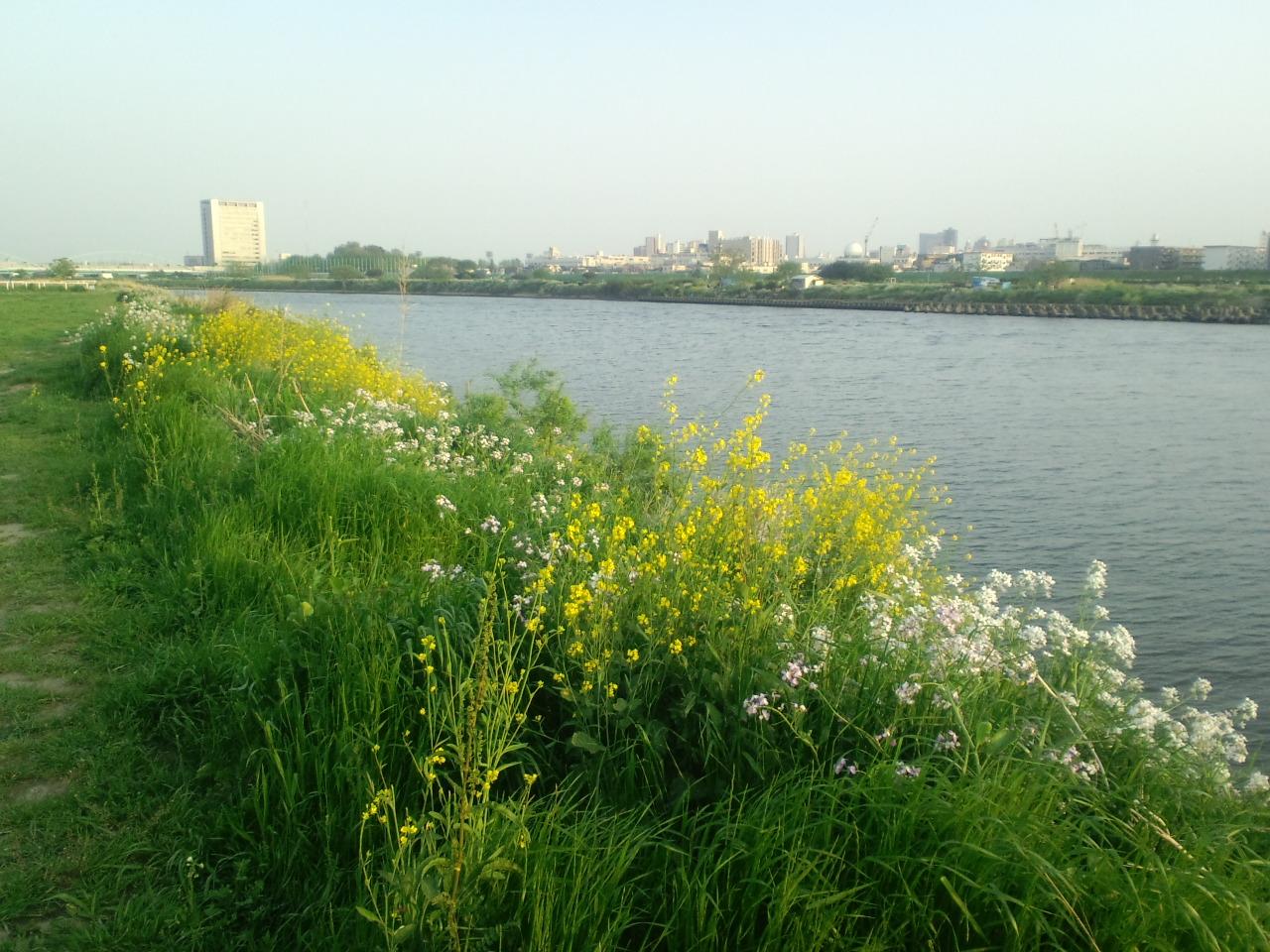 春の多摩川のほとり
