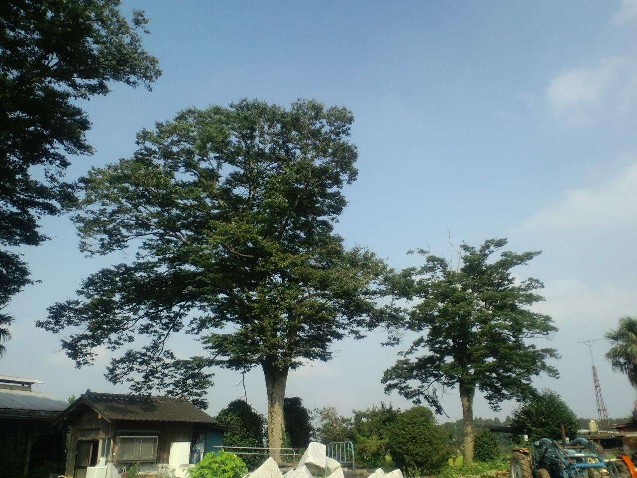 日本の田舎の夏